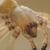 Mazda-biler invaderes av edderkopper